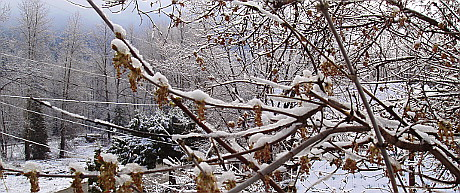 Snow on branches, April 2, 2015