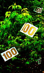 Magic Tree with 100s